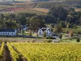 Zorgvliet Wine Estate  Stellenbosch  Cape Province  South Africa  Africa