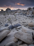 Landscape  Joshua Tree National Park  California  United States of America  North America