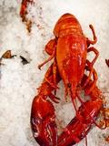 Lobster For Sale in Alma  New Brunswick  Canada  North America