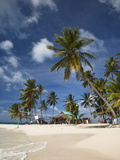 Beach and Palm Trees on Dog Island in the San Blas Islands  Panama  Central America