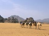 Camel Caravan  Akakus  Sahara Desert  Fezzan  Libya  North Africa  Africa