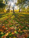 Hyde Park in Autumn  London  England  United Kingdom  Europe