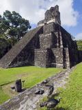 Turkeys at a Pyramid in the Mayan Ruins of Tikal  UNESCO World Heritage Site  Guatemala