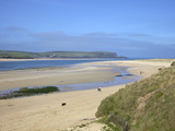 Visitors and Tourists Walking Dogs on Beach at Camel Estuary Near Rock  North Cornwall  England  Uk