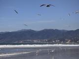 Beach  Santa Monica  Malibu Mountains  Los Angeles  California