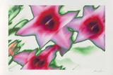 Star Tulip  c2002