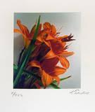 Feuerlilie (klein)