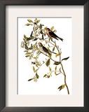 Audubon: Redpoll  1827