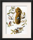 Audubon: Titmouse