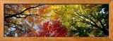 Arbres aux couleurs automnales, vus de dessous Photo encadrée par Panoramic Images