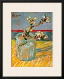 Blossoming Almond Branch in a Glass  c1888