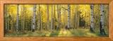 Aspen Trees in Coconino National Forest, Arizona, USA Photo encadrée