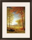 Autumn in America  Oneida County  New York