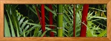 Bambous, Hawaii, USA Photo encadrée par Panoramic Images