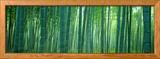 Forêt de bambous à Sagano (Kyoto), Japon Photo encadrée