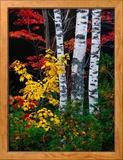 Fall Color, Old Forge Area, Adirondack Mountains, NY Photo encadrée par Jim Schwabel