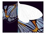 Metamorphosis of Iris