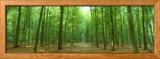 Pathway Through Forest, Mastatten, Germany Photo encadrée