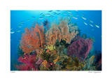 Sea Fans and Schooling Fusiliers