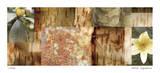 Yellow Mosaic II