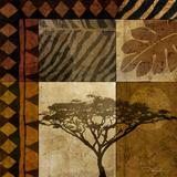 Acacia Sunrise I