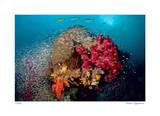 Reef Scenic 5