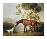 Bay Horse and White Dog