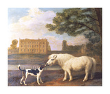 Pony and Hound In Front of Brocklesby Park