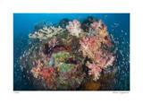 Reef Scenic 2