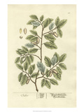 Non-Embellished Vintage Foliage I Reproduction d'art par Blackwell
