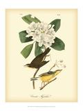 Canada Flycatcher Reproduction d'art par John James Audubon