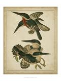 Vintage Kingfishers IV