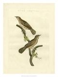 Nozeman Birds V