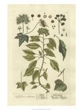 Non-Embellished Vintage Foliage II Reproduction d'art par Blackwell