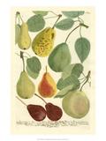 Plentiful Pears I