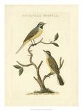 Nozeman Birds III