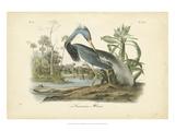 Audubon's Louisiana Heron Reproduction d'art par John James Audubon