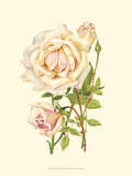 Victorian Rose III Reproduction d'art par P. Seguin-Bertault