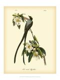 Tyran des savanes Reproduction d'art par John James Audubon