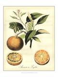 Printed Tuscan Fruits III Reproduction d'art par Vision Studio