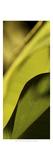 Leaf Detail I