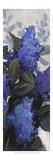 Lilac Spray II