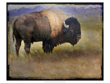 Bison Portrait II