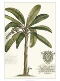 Non-embellished Palm Fresco I