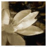 Bronze Lily IV