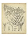 Vintage Curtis Botanical VI Reproduction d'art par Samuel Curtis