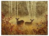 Foggy Deer Reproduction d'art par Chris Vest