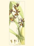 Brilliant Orchids II
