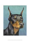 Dog Portrait  Dobie