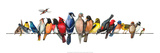 Large Bird Menagerie Reproduction d'art par Wendy Russell
